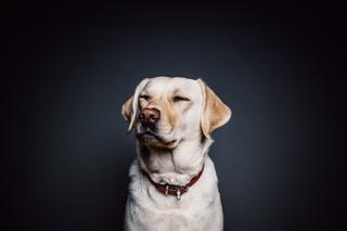 Les sens du chien - Top-Pet