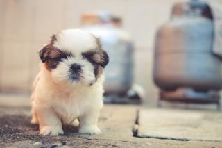 Le poil du chien - Top-Pet
