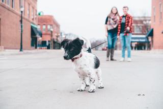 Nouvelle loi pour les chiens - Top-Pet