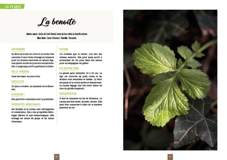 Pages Plantes Sauvages Comestibles