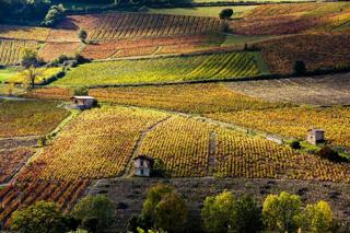 Paysage de vignoble français